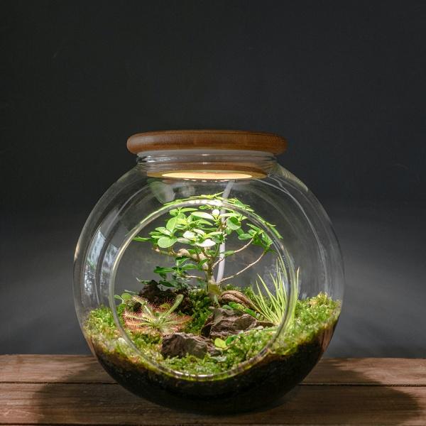 iris鳶尾花集-微景觀苔蘚製作