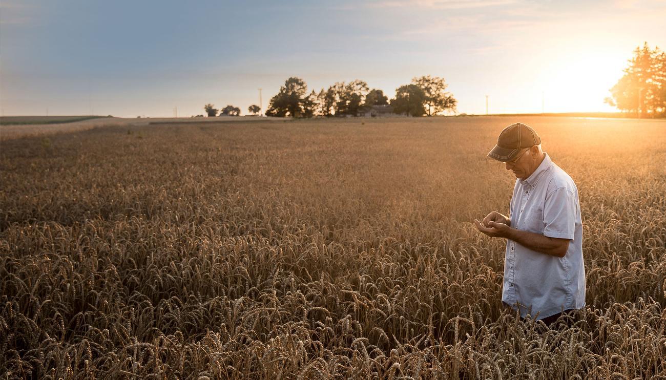 Immagine che contiene erba, cielo, esterni, campo  Descrizione generata automaticamente