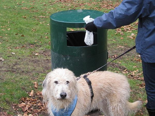 D:\БИЗНЕС\ДИМА\Картинки для подготовки дома для собаки\cleaning dogs poop.jpg