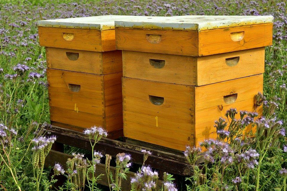 Colmena, Abejas, Apicultura, Miel, Bee House