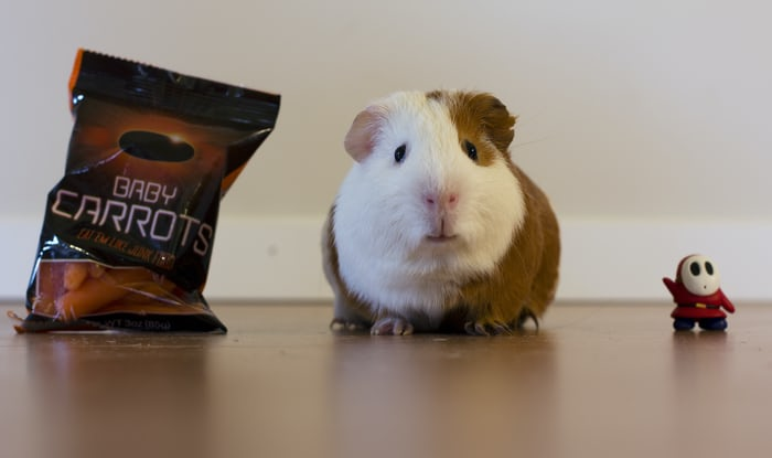 Which foods are unsafe to put into your guinea pig food list