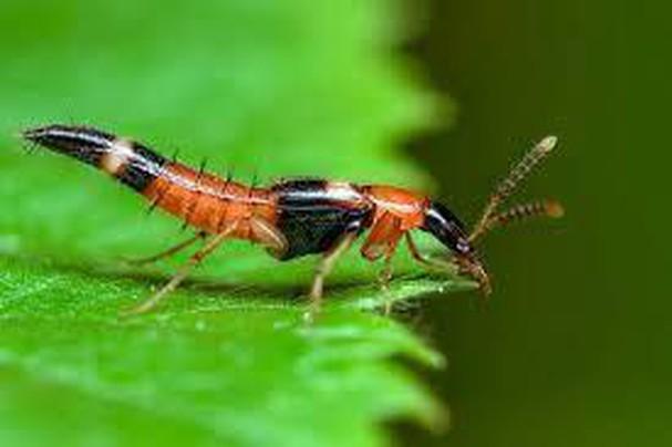 Diễn đàn rao vặt tổng hợp: Những loài côn trùng có ích bà con nông dân nên biết Nqp6oaAiniFti_OKleLd_iNaUB_eEY0E3sumeZWGVfljNkWe-aAn9cbsdR9cLFHDCb0J-NW_hVgWTy4m7tdqVxUF8HRLeickuHc6qfX22Ko9ZNixy3ZwkMNhqISKu3gcpeVNhni_