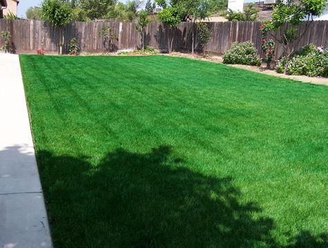 Une image contenant herbe, extérieur, vert, parc  Description générée automatiquement