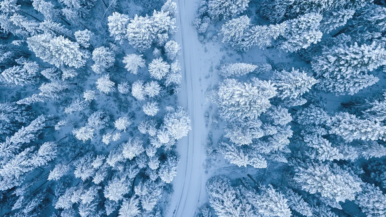 drone photography of a road and the surrounding snow forest