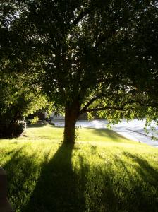 yard-tree