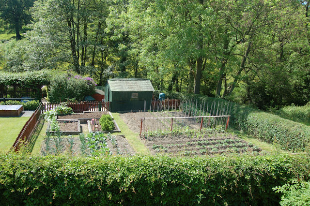 Well_kept_vegetable_patch_-_geograph.org.uk_-_1334223.jpg