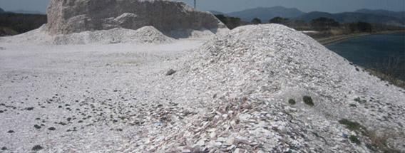 なぜホタテ貝殻は飼料に使われる?