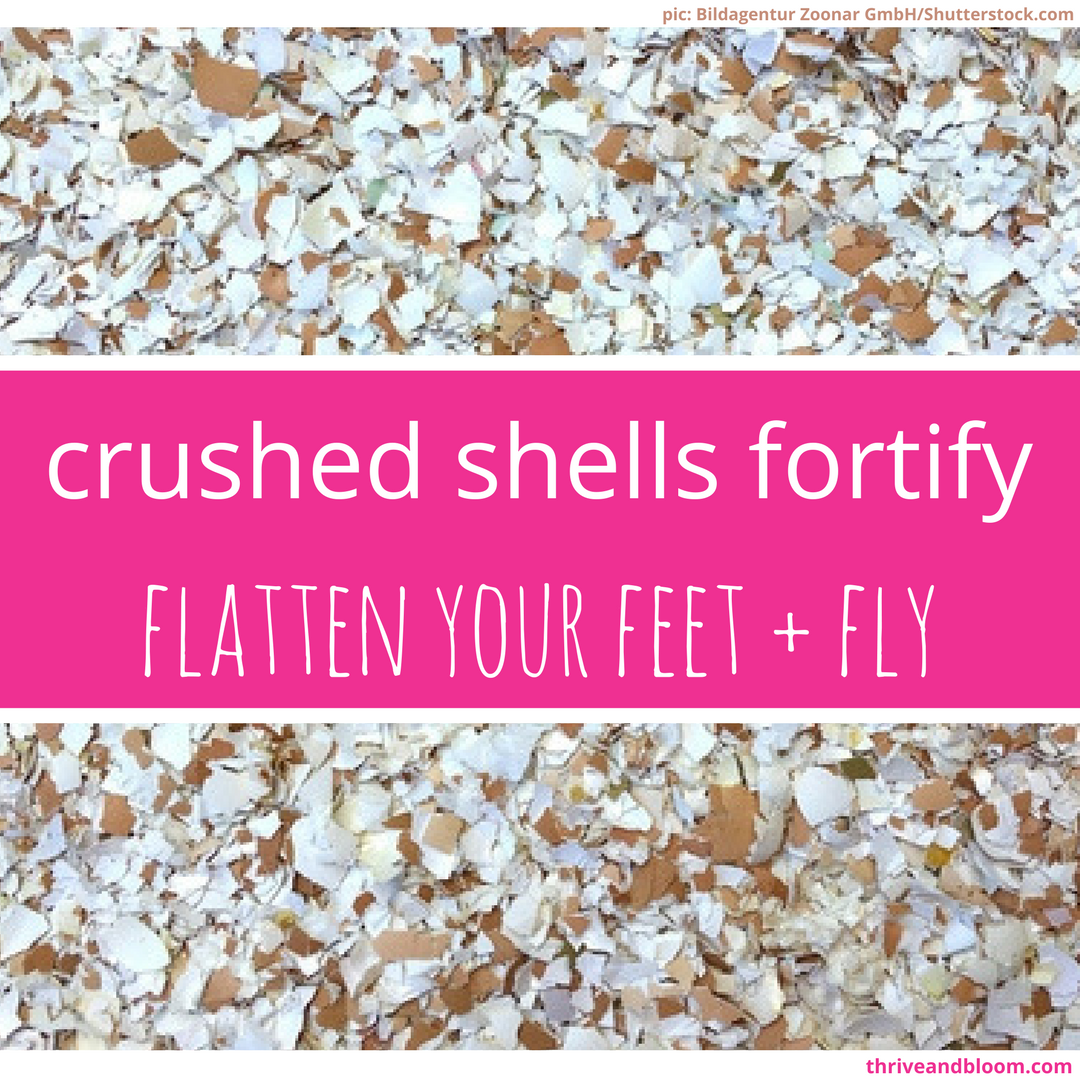 crushed shells fortify.png