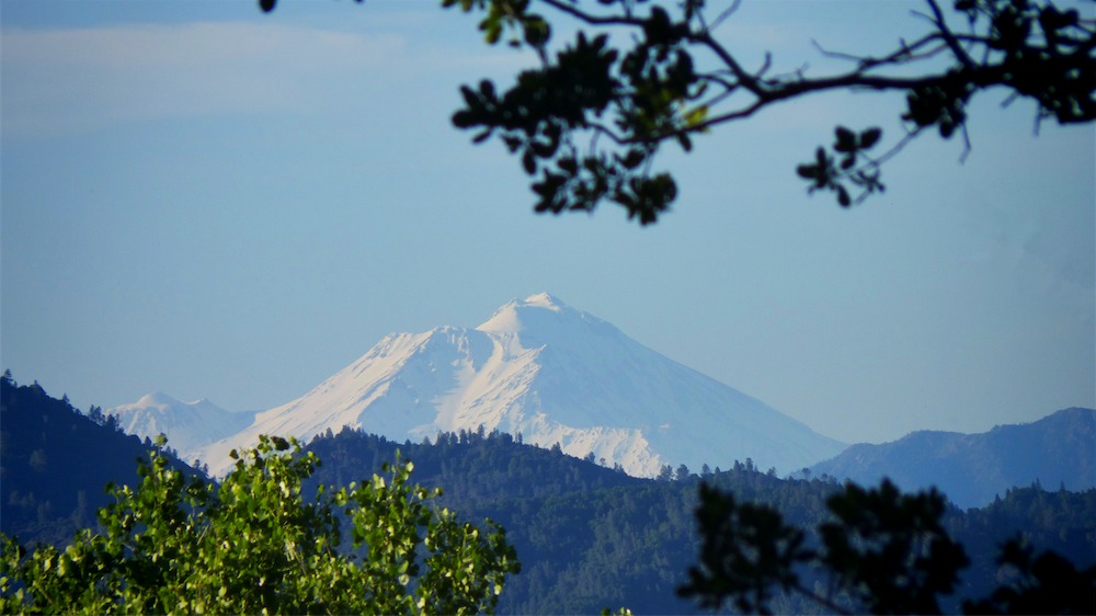 Shasta T 2 no branch.jpg