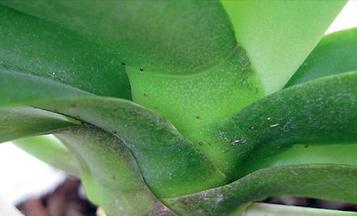 Болезни орхидей