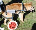 C:UsersuserDesktopTomomi2カット済み中型犬L2輪22.jpg