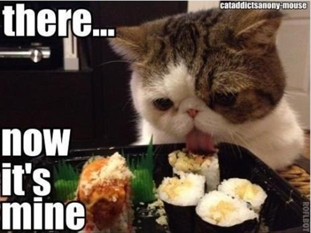 funny-pictures-cat-eating-food.jpg