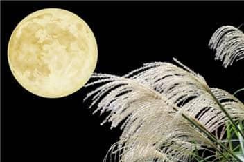 月とススキ-min