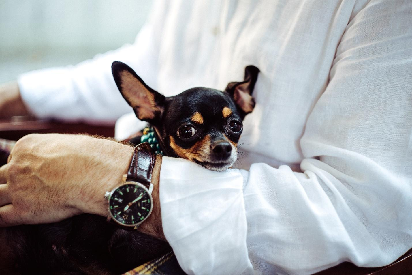 5 Important Things You Need To Know When Traveling With A Pet