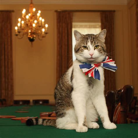 Only 1 Member of the British Royal Family Has a Cat - Here ...
