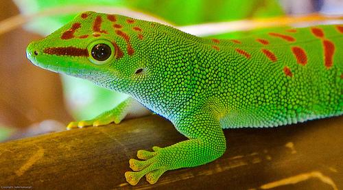 Reptiles Make Great Pets
