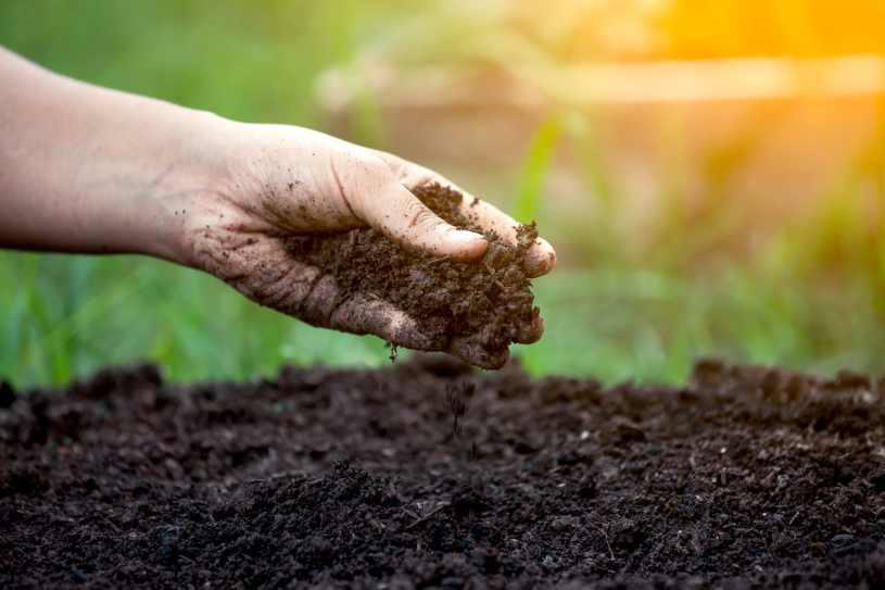 Preparar el Suelo Para Plantar - ¿Cómo hemos de preparar el suelo para  Plantar? | Jardineria - Elementos para el Cultivo