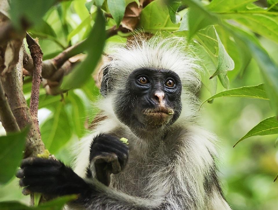Изображение выглядит как животное, примат, дерево, внешний  Автоматически созданное описание