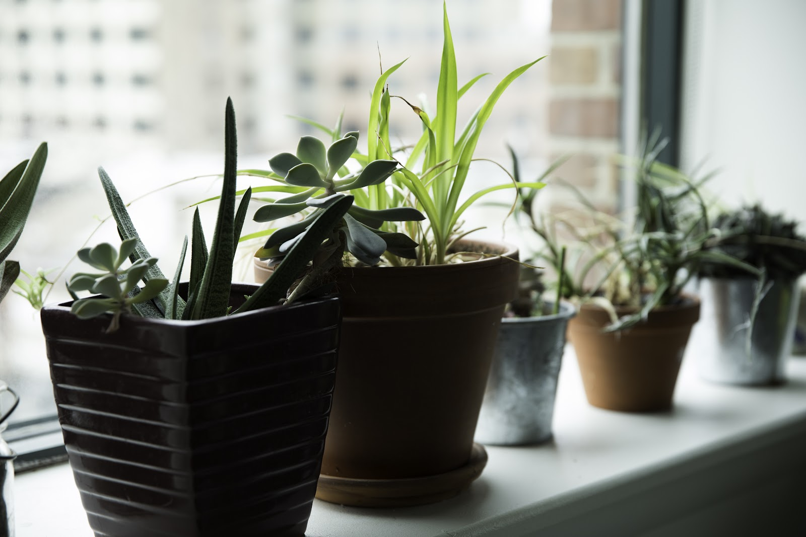 Plants in a windowsill