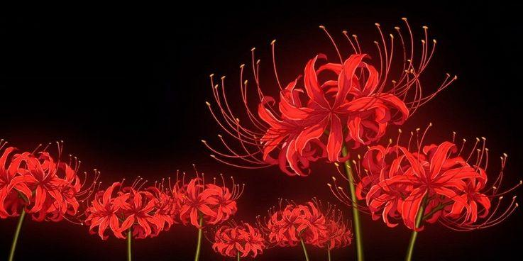 C:\Users\waleed.ahmed\Downloads\Red-Spider-Lily.jpg