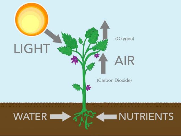 Nutrição de plantas  Fonte: Huntington Ed