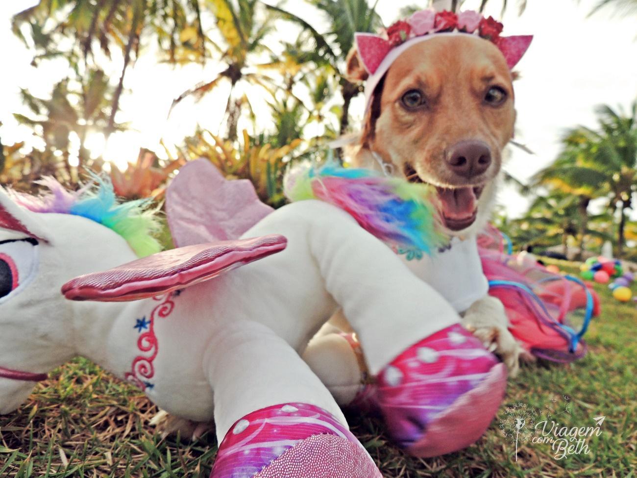 Foto dog - Nina dog e unicórinio