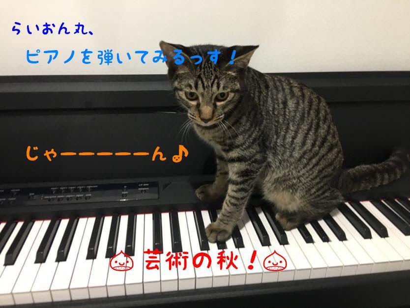 芸術の秋!猫とピアノのいい関係