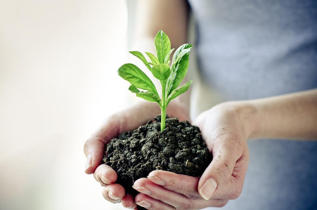 planta creciendo después de utilizar un fertilizante