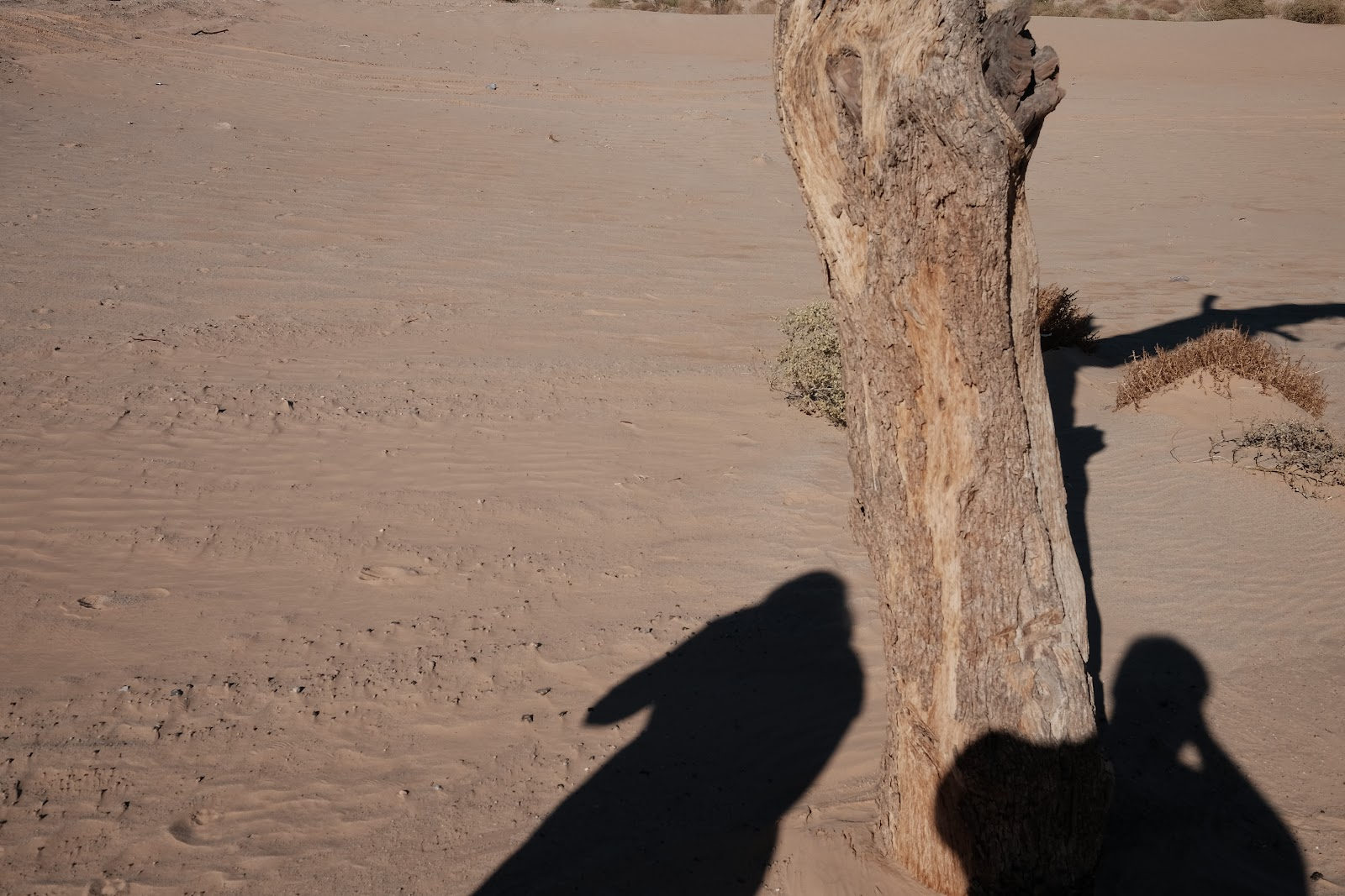 Shadows 12-29-16.jpg