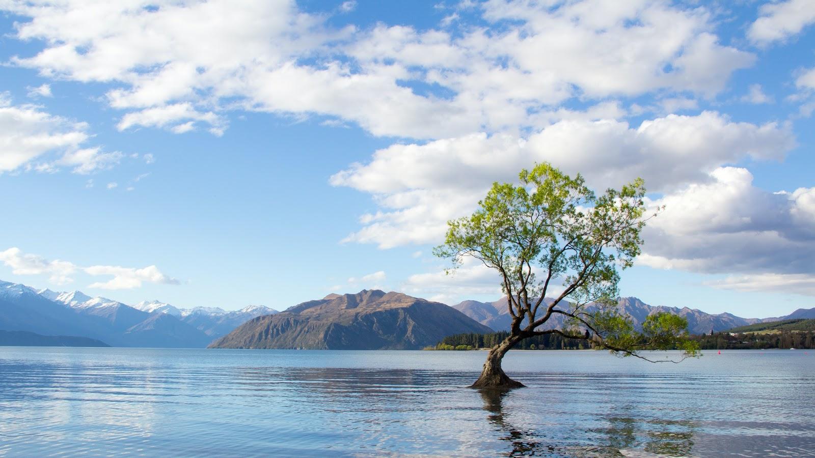 cây giữa hổ nước thức dậy tỉnh tảo đúng 5 giờ sáng