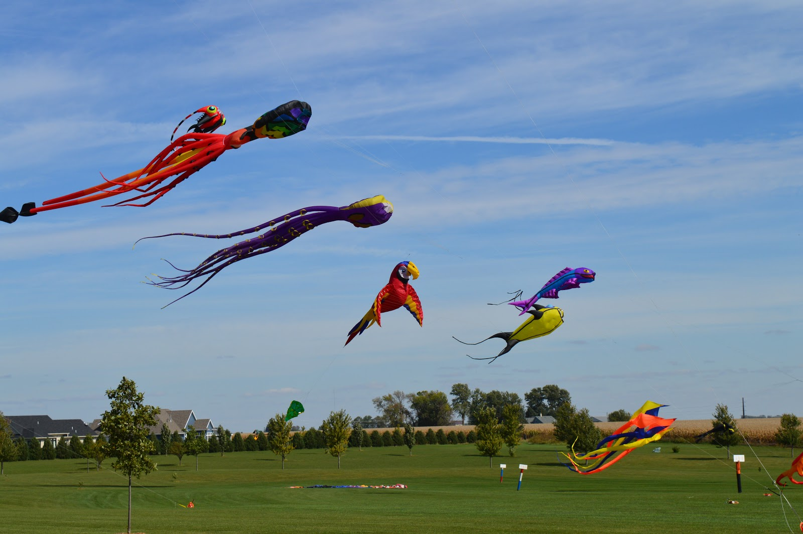 Kites Over Grinnell