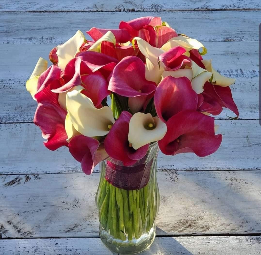 Calla Lily Flower