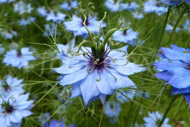 Chiêm ngưỡng hoa tình yêu làm siêu lòng giới trẻ - Ảnh 10