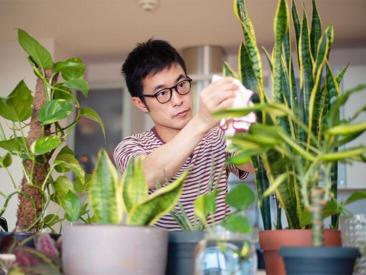 7 Science-Backed Benefits of Indoor Plants