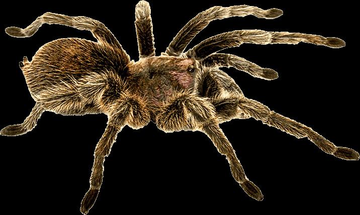 Image result for spider png
