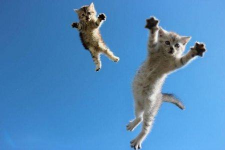 Почему кошка при падении всегда приземляется на лапы?