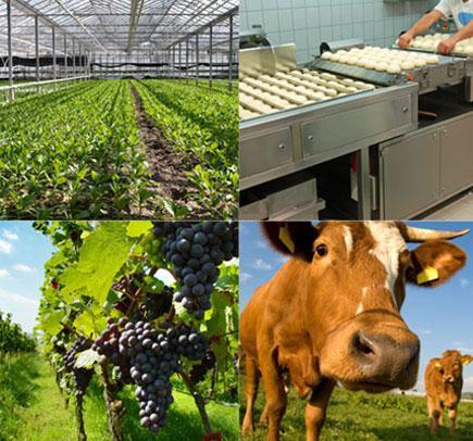 3. Tổng quan về việc làm ngành Nông nghiệp trên toàn thế giới: