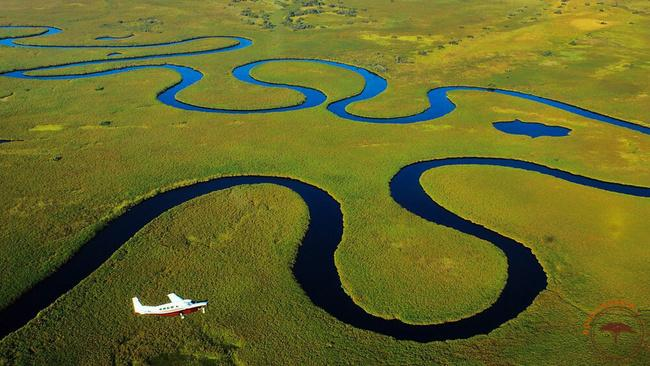 La Magie du Delta de l'Okavango   Sous l'Acacia