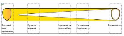 Переваги силосних гібридів кукурудзи Leafy і Leafy-Floury типу фото 4 LNZ Group