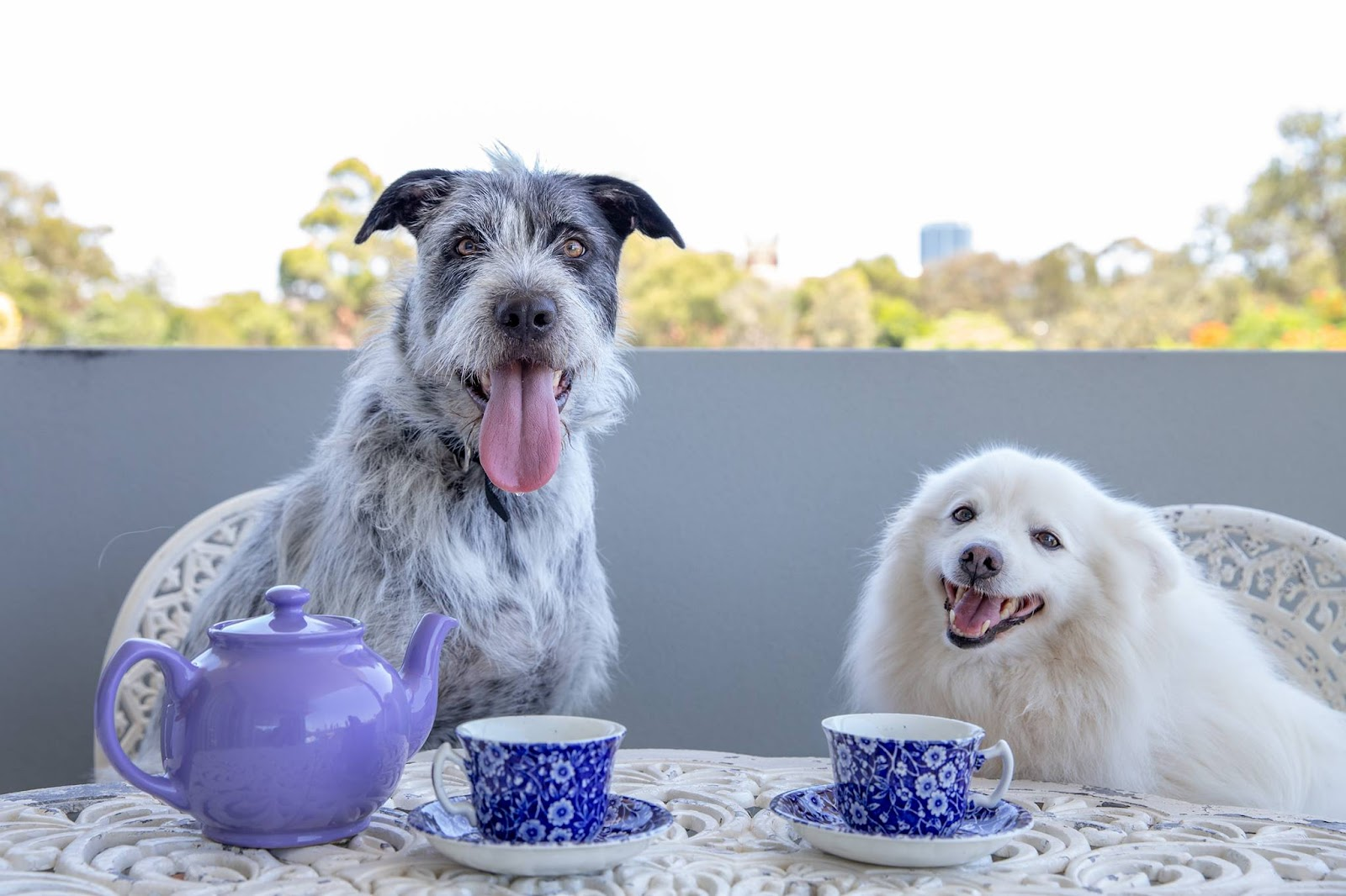 Two dogs at a table with tea cups