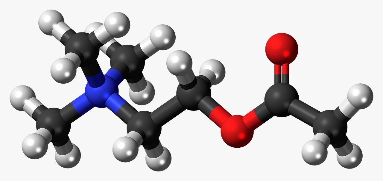 Neurotrasmisores Acetilcolina NeuroClass