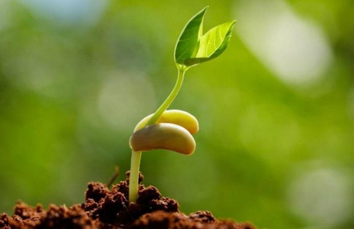 Все, що потрібно знати про останні інновації у сфері обробки насіння фото 5 LNZ Group