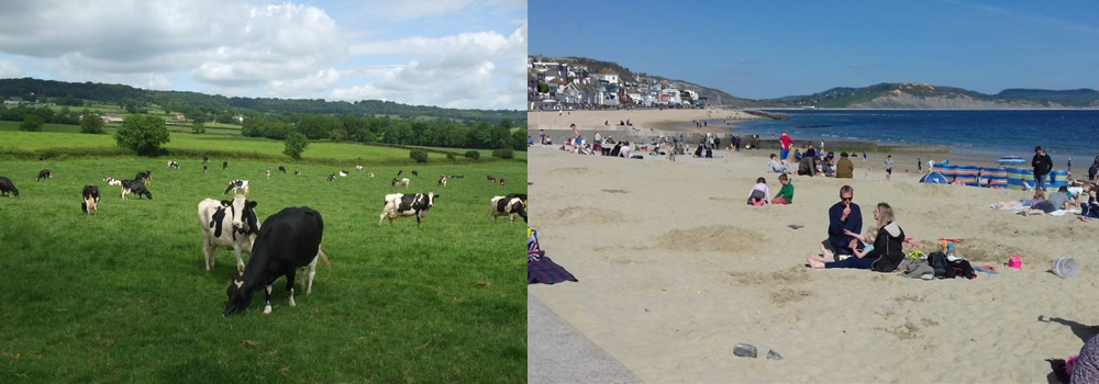 Enjoy a holiday in Devon with Devon Farm Holidays and Discover the Lyme Regis.