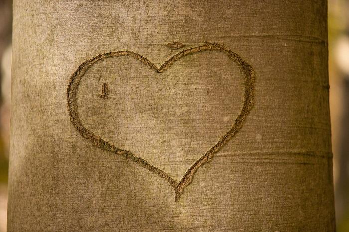 arbol-corazon.jpg