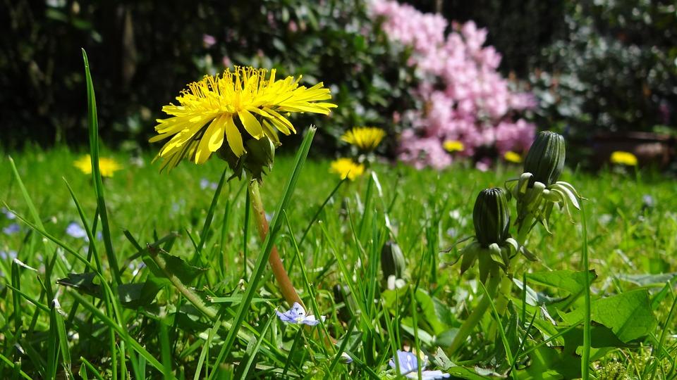 meadow-43467_960_720.jpg