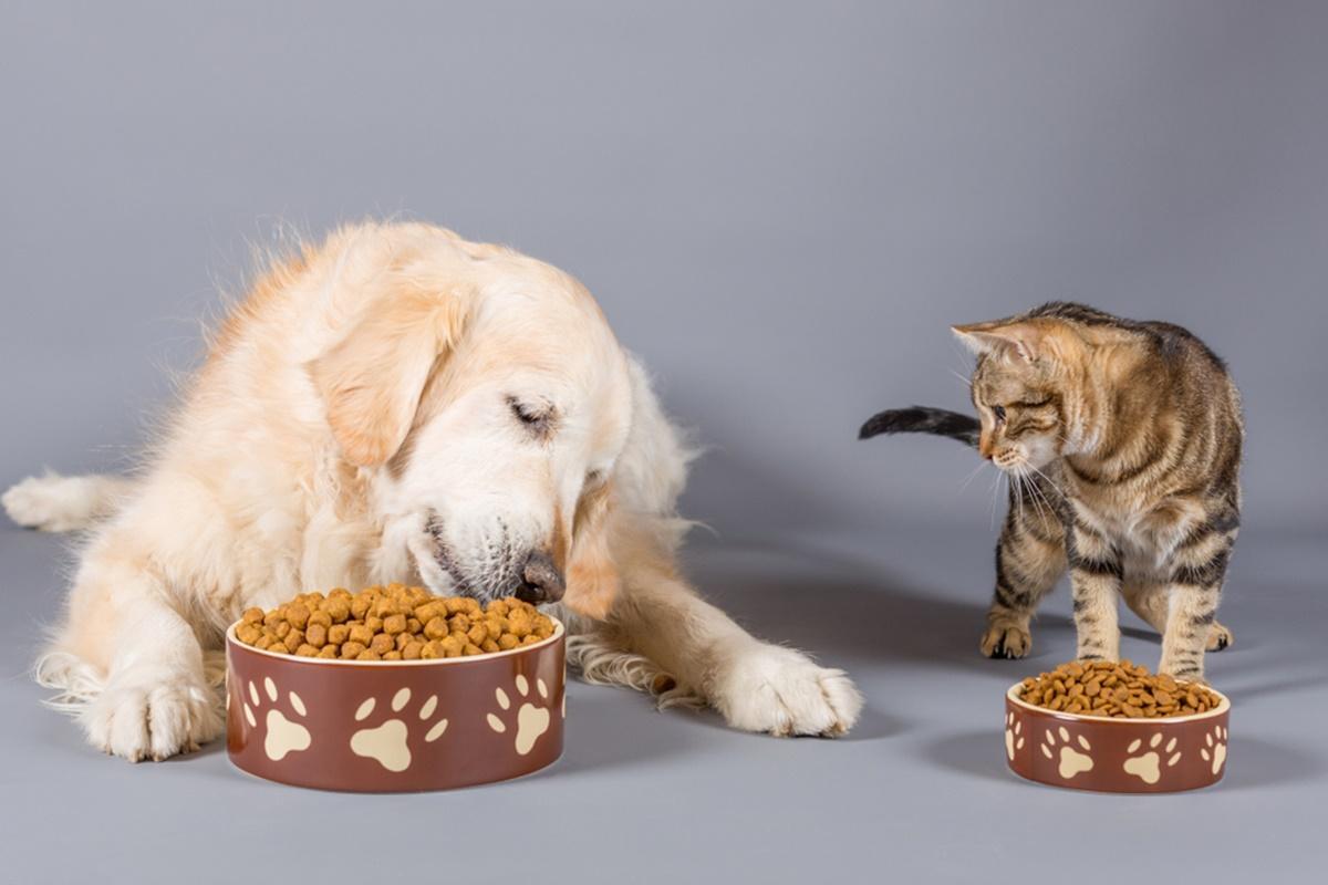 köpek, memeli, iç mekan içeren bir resim Açıklama otomatik olarak oluşturuldu