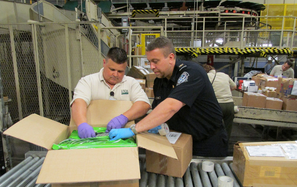 A U.S. Customs and Border Protection agriculture specialist, with assistance from Smuggling Interdiction and Trade Compliance (SITC), inspecting a parcel.