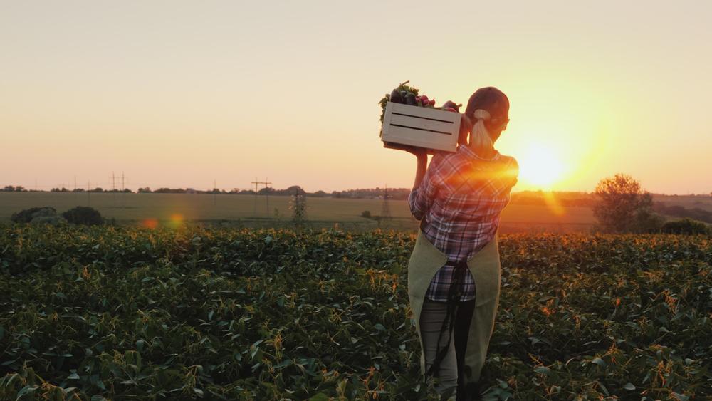 Alimentos colhidos nas safras de outono têm altos níveis nutricionais e menor necessidade de agrotóxicos. (Foto: Reprodução / Shutterstock)