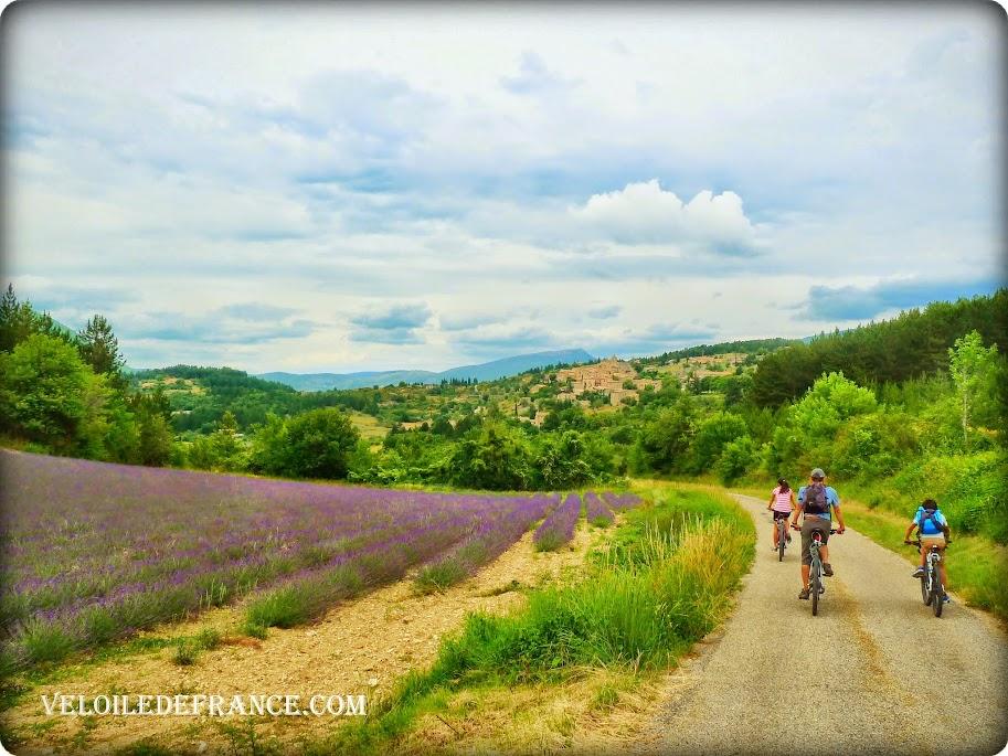 Le plateau de Sault à vélo - Circuit vélo autour du Mont Ventoux - La Provence à vélo par veloiledefrance.con