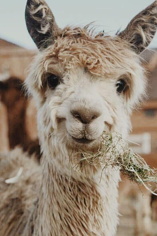 عکاسی پرتره از حیوانات